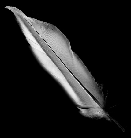 feather on a black background photo