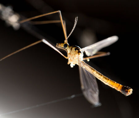 large mosquito. macro Stock Photo - 29144722