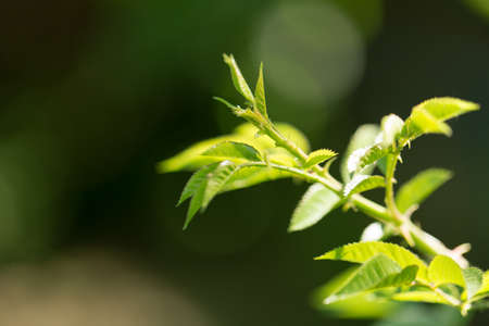 young plant in nature photo