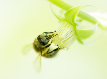 bee on a flower in nature photo