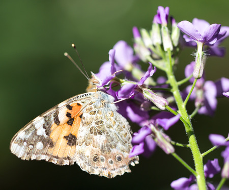transfigure: butterfly in nature Stock Photo