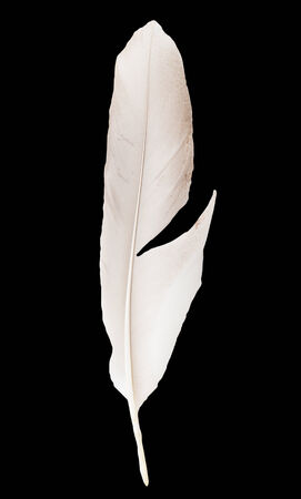 lightly: feather on a black background Stock Photo