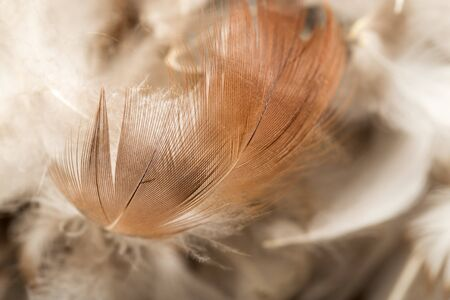duck feathers as a background. macro photo