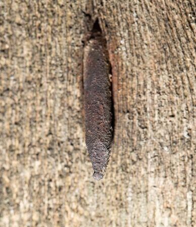 old rusty nail in the piece of wood. macro photo