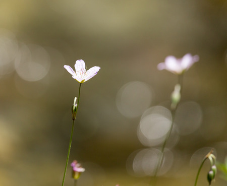 beautiful little flower in nature photo