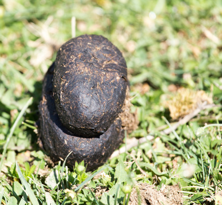poo: horse dung