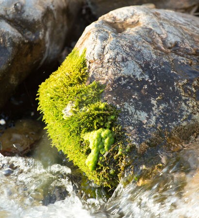 murmur: stones in the mountain river