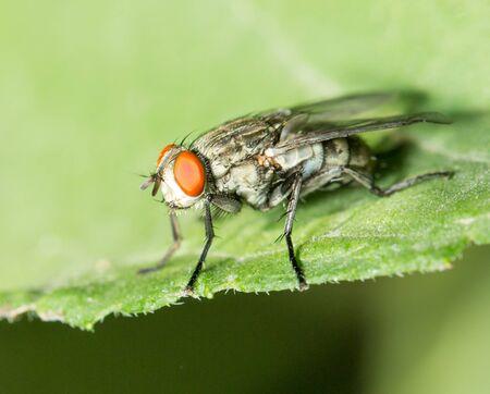 exasperation: fly. macro