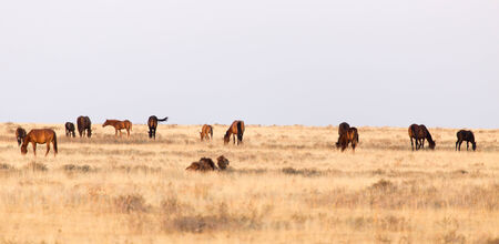 horses in the pasture on the nature photo