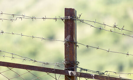 barbed wire fence: barbed wire fence Stock Photo