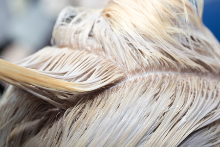 dyeing: hair coloring in the salon