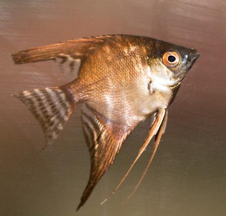 beautiful fish in the aquarium