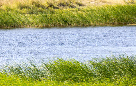 green reeds on Lake Outdoors photo