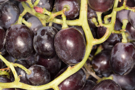 Red grape with water drops, closeup background photo