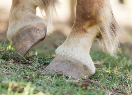racehorses: the horses hooves on the nature