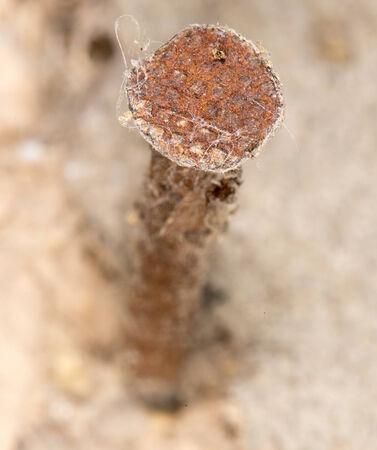 rusty nail: old rusty nail. close-up