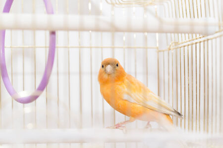 keep an eye on: bird in a cage