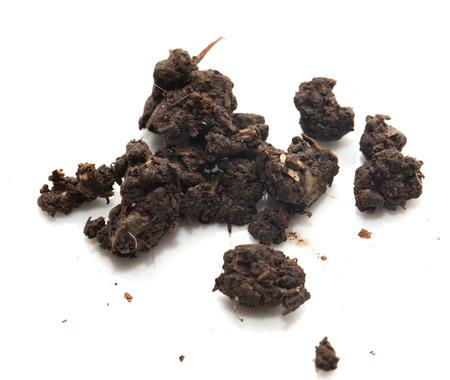 soil on a white background photo