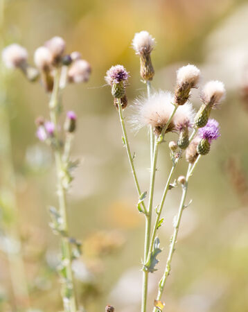 poky: flowers on a prickly plant