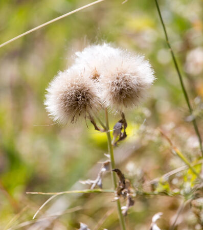 pokey: flowers on a prickly plant