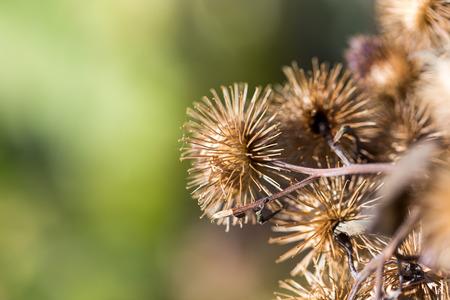 Round dry flower photo