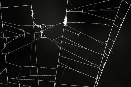 spider web on a black background photo