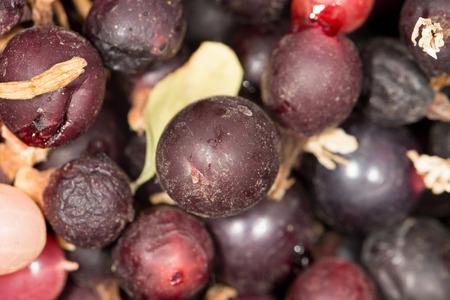 bacca: currants. close-up