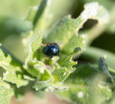 beetle in nature. macro photo