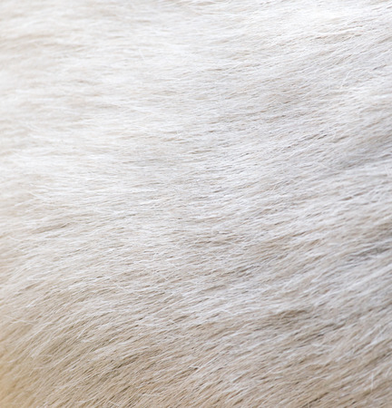 background of sheep skins photo
