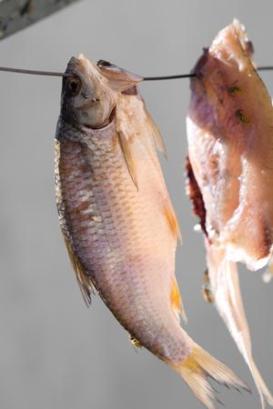 stockfish: stockfish Stock Photo