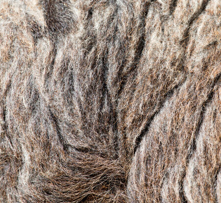 furry stuff: background made of wool sheep
