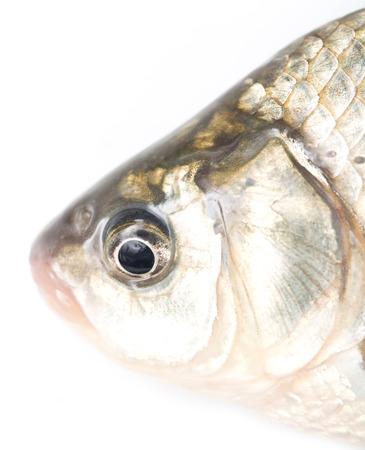 scardinius: fish head on a white background Stock Photo