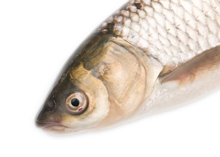 erythrophthalmus: fish head on a white background Stock Photo