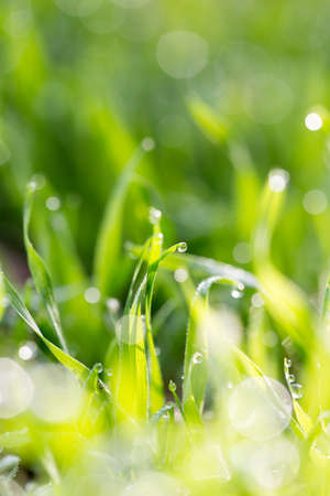 water drops on a green grass photo