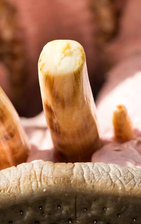 kisser: hippopotamus teeth Stock Photo