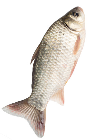 scardinius: fish on a white background