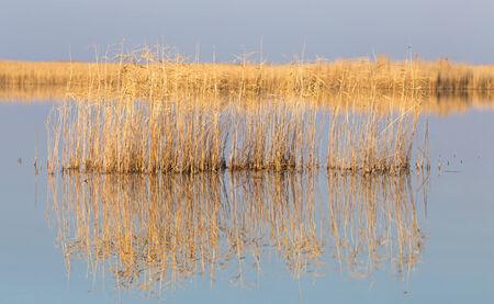canne: canne sul lago All'aperto