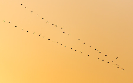 a flock of birds at sunset photo