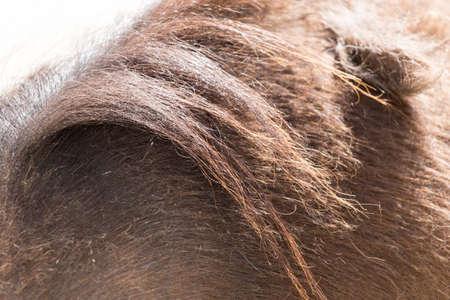 horse mane as background photo