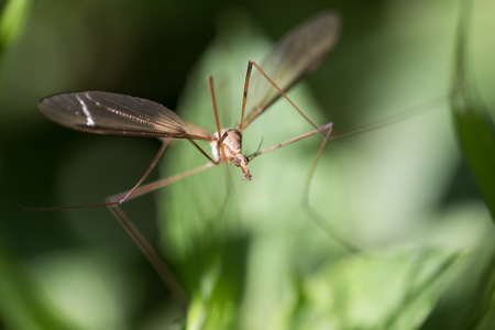 mosquito in the grass outdoors. macro photo