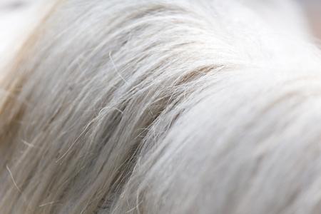Criniera del cavallo come sfondo Archivio Fotografico - 34062323