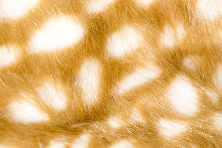 giraffe skin: Background of giraffe skin