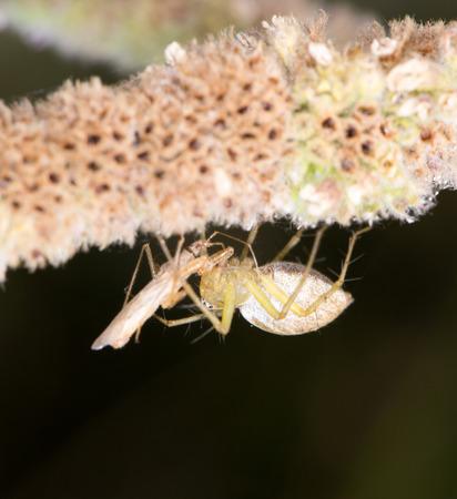 arachnidae: spider in nature. close-up