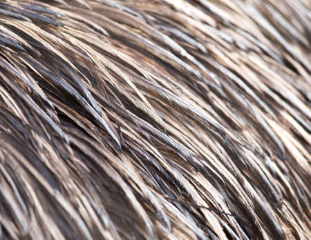 bird feathers: background bird feathers Stock Photo
