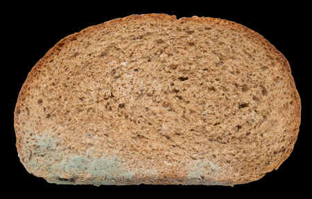 mouldy: mold on bread on a black background Stock Photo