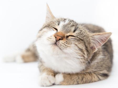 cat on a white background Standard-Bild