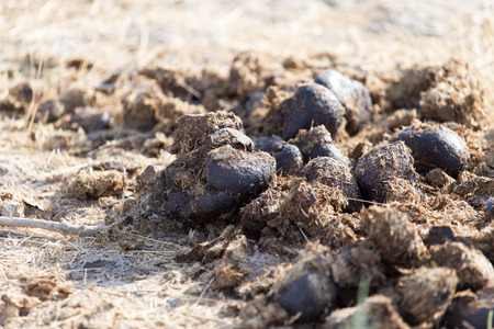 dung: horse dung