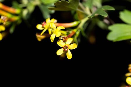 macro flowers: beautiful little yellow flowers in nature. macro