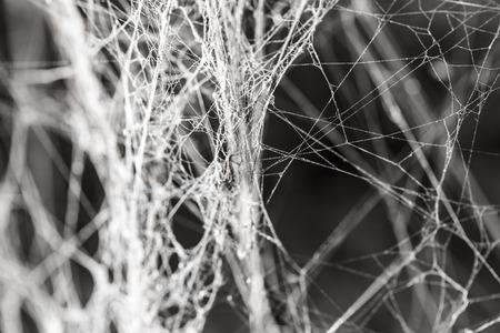 抽象的な背景古いクモの巣