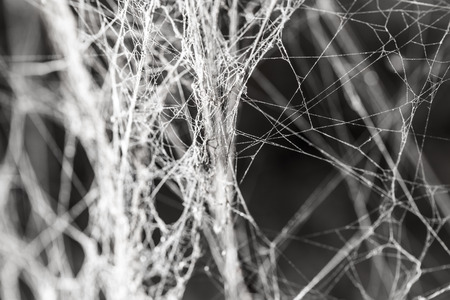 lightbeam: abstract background old spider webs Stock Photo
